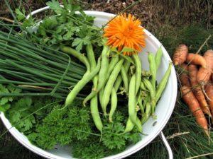 Liste over innhold av salisylsyre og aminer - grønnsaker fra kjøkkenhagen på hytta